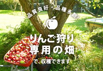 りんご狩り専用畑